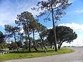 Port et plage boisée du Betey Andernos (10).JPG