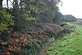 Powdermill Stream near Adam's Farm - geograph.org.uk - 1578182.jpg