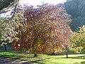 Princes Street Gardens, Nov 2011 (6321959283).jpg