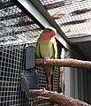 Princess Parrot 2.jpg