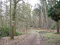Private woodland on Lizard Hill - geograph.org.uk - 747946.jpg