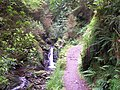 Puck's Glen - geograph.org.uk - 32454.jpg