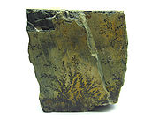 Example of a dendrite