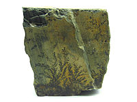 Pyrolusite Mineral with Dendrite Macro.JPG