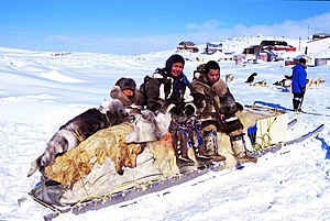Indigenous peoples - Inuit on a traditional qamutik (dog sled) in Cape Dorset, Nunavut, Canada
