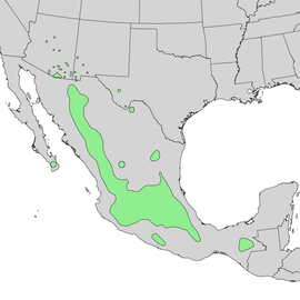 Quercus rugosa range map 1.png