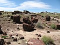 Rainbow Forest Path-Petrified Forest National Park - panoramio.jpg