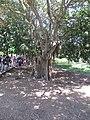 Ramat Hanadif Park 01.jpg