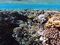 Ras Mohammed coral reefs.jpg