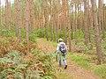 Rauchfangswerder - Waldweg (Woodland Path) - geo.hlipp.de - 42501.jpg