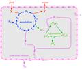 Reaction scheme of Gánti's chemoton.png