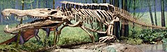 Redondasaurus bermani at CMNH 04.jpg