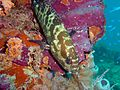 Reef0843 - Flickr - NOAA Photo Library.jpg