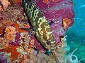 Reef0843 - Flickr - NOAA Photo Library.jpg