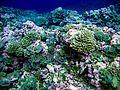 Reef3796 - Flickr - NOAA Photo Library.jpg