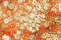 Restes de coquillages et d'algues sur un voile de quille (12).JPG