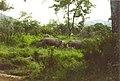 Rhinos (207920330).jpg