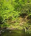 River Barle - geograph.org.uk - 1304465.jpg