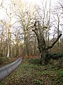 Road through the Lion's Mouth - geograph.org.uk - 641930.jpg