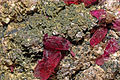 Rosélite, cobaltaustinite, dolomite 1100.FS2015 1.jpg