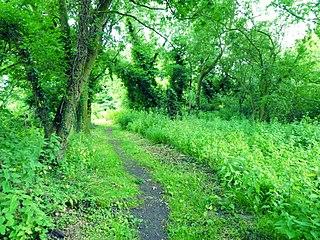 Roydon Fen Suffolk Wildlife Trust nature reserve