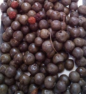 Rudraksha - Rudraksh Fruits