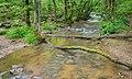 Ruisseau des Palanges (16).jpg