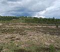 Säkylänharju 2.jpg