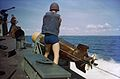 Sailor readies torpedo for launch from PT boat off Florida c1944.jpg