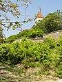 Saint-Prix (95), vignoble au pied de l'église du vieux village 1.JPG