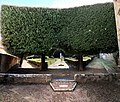 San quirico d'orcia, horti leonini, serliana verde 03,0.jpg
