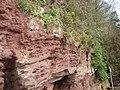 Sandstone cliffs at Laugharne - geograph.org.uk - 461215.jpg