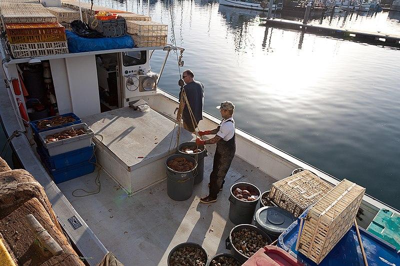 Santa Barbara Harbor fishermen.jpg