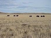 Saskatchewan - Grasslands National Park 02.JPG