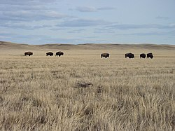 Grasslands National Park v Saskatchewanu