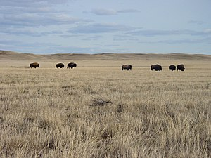 Grasslands National Park - Image: Saskatchewan Grasslands National Park 02