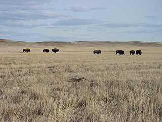 Grasslands National Park Canadian national park located in Saskatchewan