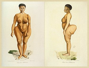 Sarah Baartman - Illustration of Baartman from Illustrations de Histoire naturelle des mammifères