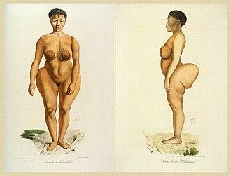Sarah Baartman - Illustration of Baartman from Illustrations de Histoire naturelle des mammifères