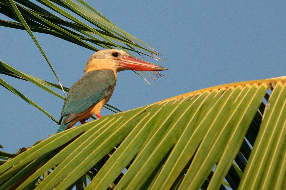 Sb Kingfisher DSC 3816