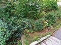 Schaftreppe Pirna (42750398580).jpg