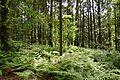 Schleswig-Holstein, Windbergen, Landschaftsschutzgebiet Wodansberg NIK 6717.JPG