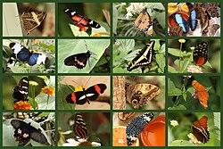 SchmetterlingeSayn.jpg