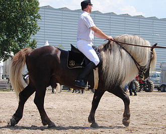 Black Forest Horse - The Black Forest Horse