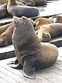 Sea Lions, Fisherman's Wharf, San Francisco.jpg