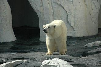 Wild Arctic - Image: Sea World Wild Arctic