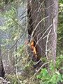 Seney National Wildlife Refuge (6033036902).jpg