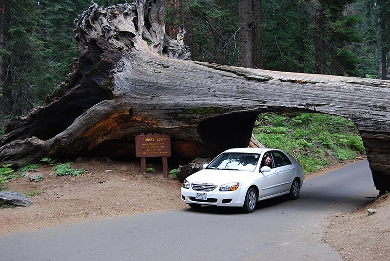 File:Sequoia N.P. - Tunnel Log - panoramio.jpg