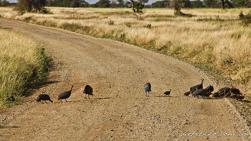 File:Serengeti, Tanzania - panoramio (18).jpg