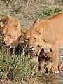 Serengeti 18 (14700649935).jpg